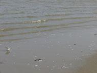 20070223-56.jpg